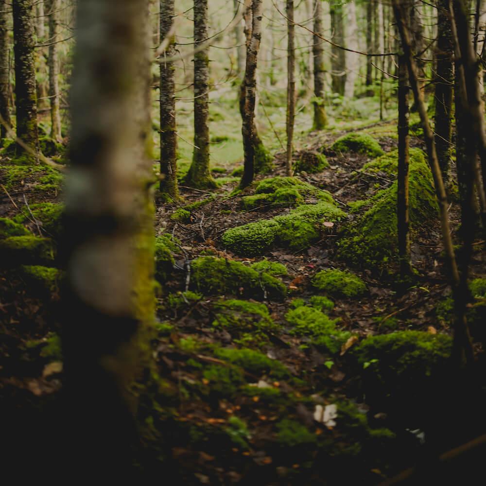 Sentiers et parcs mycologiques